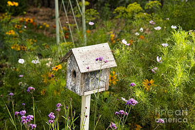 Photograph - Birdhouse In Garden by David Arment