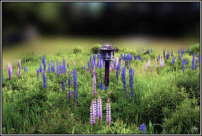 Photograph - Birdhouse In Lupine Field by Wayne King