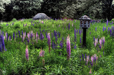 Photograph - Birdhouse In The Lupine by Wayne King
