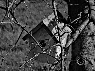 Photograph - Birdhouse In Tree by Amanda Balough