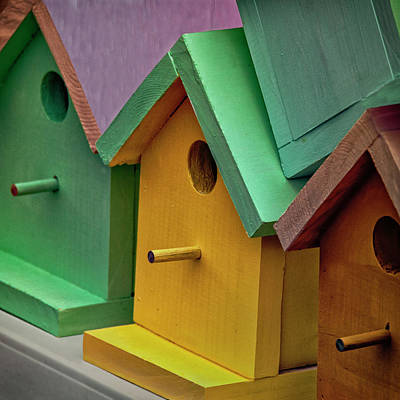 Photograph - Birdhouses by Phil Cardamone