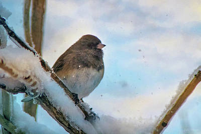 Photograph - Birdie Its Cold Outside by John Rivera