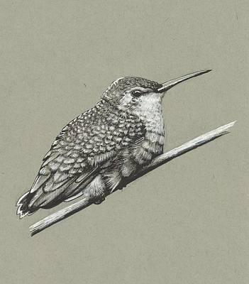 James Parker Drawing - Birdie by James Parker