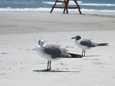 Jacksonville Beach Photograph - Birdie Looking At Me by Deb Campbell