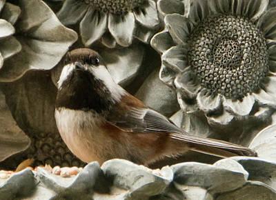Photograph - Chickadee Feeding by Marilyn Wilson
