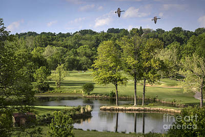 Photograph - Birdie On Back Nine by Andrea Silies