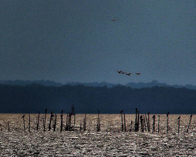 Photograph - Birdies by Robert McCubbin