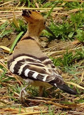 Exploramum Photograph - Birdlife On The Nile by Exploramum Exploramum