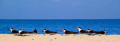 Photograph - Birdline by Gary Dean Mercer Clark