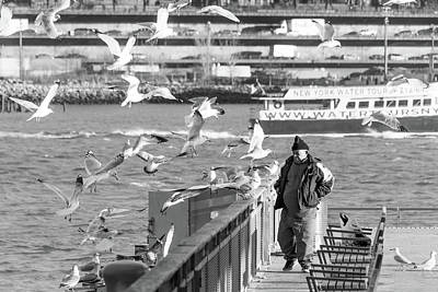 Photograph - Birdman And Seagulls by SR Green