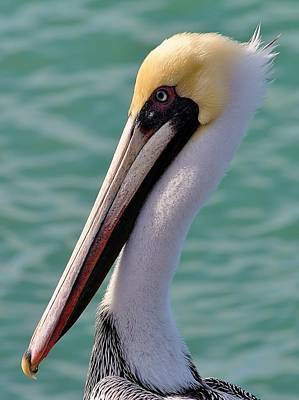 Photograph - Birds 1 16 by John Hintz