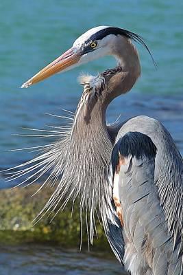 Photograph - Birds 1 16b by John Hintz