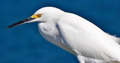 Photograph - Birds 11 17 by John Hintz