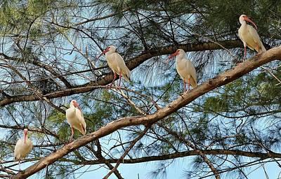 Photograph - Birds 12 15 by John Hintz