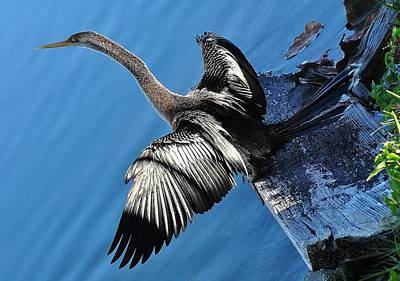 Photograph - Birds 2 16 by John Hintz