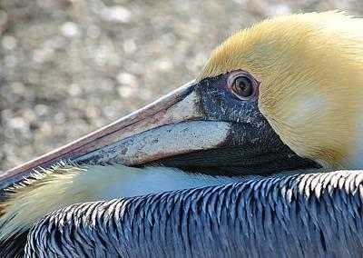 Photograph - Birds 2 16b by John Hintz