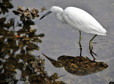 Photograph - Birds 3 16 by John Hintz