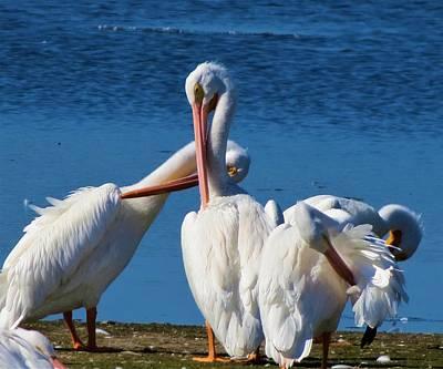 Photograph - Birds 3 by Vijay Sharon Govender