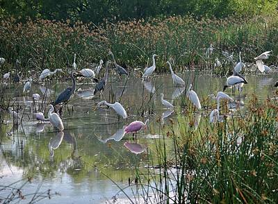 Photograph - Birds 4 15 by John Hintz