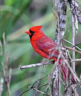 Photograph - Birds 4 15b by John Hintz