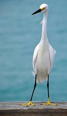 Photograph - Birds 5 12 by John Hintz