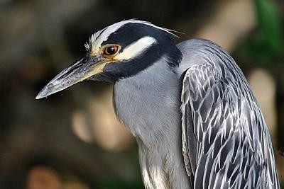Photograph - Birds 7 16 by John Hintz