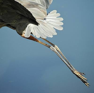 Photograph - Birds 8 12b by John Hintz