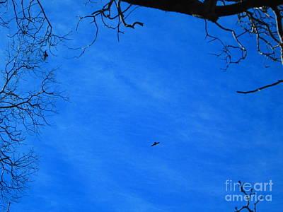 Photograph - Birds Aloft In The San Bernardino Mountains by Julia Hanna