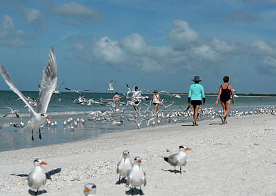 Digital Art - Birds And Beach by Susan Stone