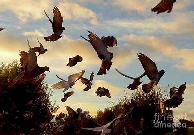 Birds And Fun At Butler Park Austin - Birds 1 Art Print by Felipe Adan Lerma