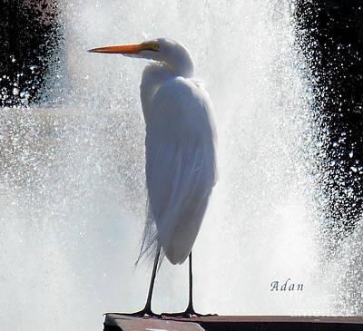 Butler Park Austin Texas Photograph - Birds And Fun At Butler Park Austin - Birds 2 Detail by Felipe Adan Lerma