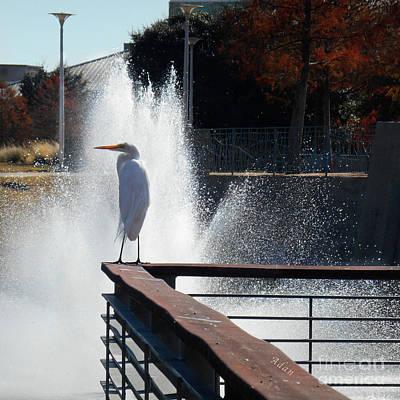 Butler Park Austin Texas Photograph - Birds And Fun At Butler Park Austin - Birds 2 by Felipe Adan Lerma