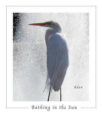 Birds And Fun At Butler Park Austin - Birds 2 Macro Poster Art Print by Felipe Adan Lerma