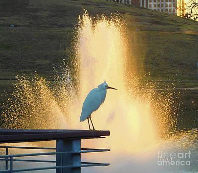 Butler Park Austin Texas Photograph - Birds And Fun At Butler Park Austin - Birds 3 Detail by Felipe Adan Lerma