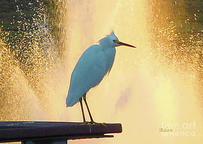 Birds And Fun At Butler Park Austin - Birds 3 Detail Macro Art Print by Felipe Adan Lerma