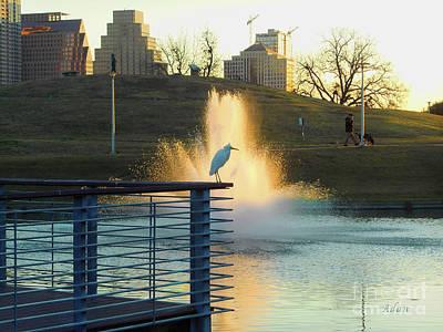 Butler Park Austin Texas Photograph - Birds And Fun At Butler Park Austin - Birds 3 by Felipe Adan Lerma
