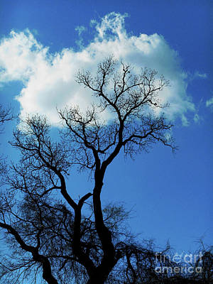 Butler Park Austin Texas Photograph - Birds And Fun At Butler Park Austin Clouds And Trees Three by Felipe Adan Lerma