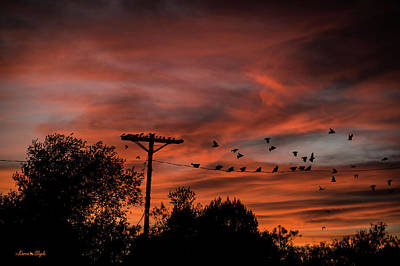 Photograph - Birds And Sunset by Karen Slagle