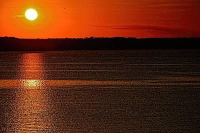 Photograph - Birds And The Sun by Diana Mary Sharpton
