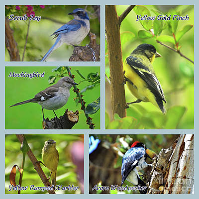 Photograph - Birds Around My House Collage by Debby Pueschel