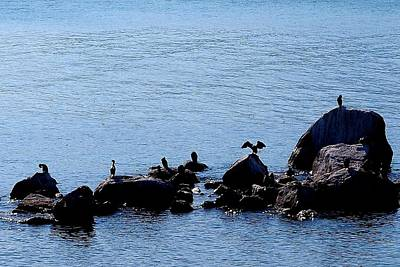 Photograph - Birds At Lake Malawi 05 by Dora Hathazi Mendes