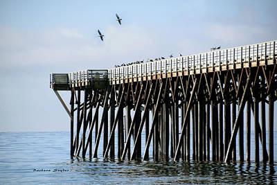 Photograph - Birds At San Simeon Pier by Barbara Snyder