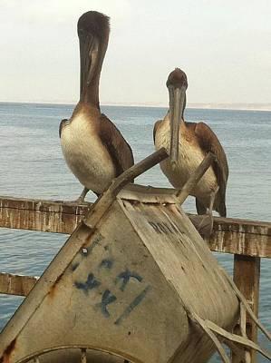 Photograph - Birds At Sea by Angela Holmes