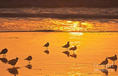 Birds At Sunset Art Print by Loriannah Hespe