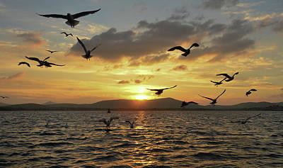 Photograph - Birds by Barbara Walsh