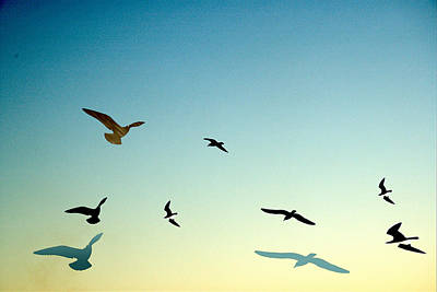 Photograph - Birds by Barry Doherty