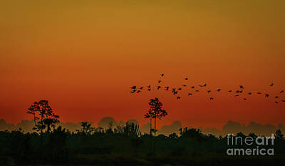 Photograph - Birds Crossing Morning Sky by Tom Claud