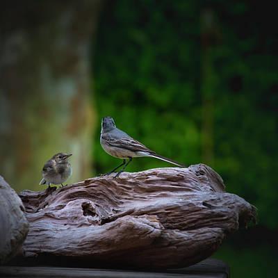 Photograph - Birds by Edgar Laureano