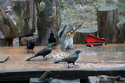 Photograph - Birds Enjoying The Music by Dan Friend