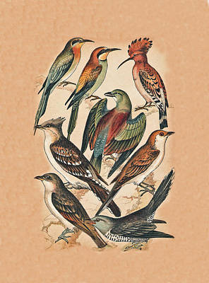 Cuckoo Mixed Media - Birds by Eric Kempson